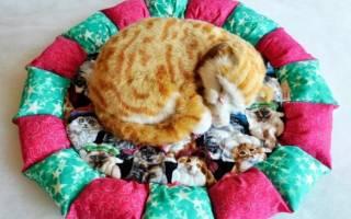 Лежак для кошек своими руками: мастер класс с фото
