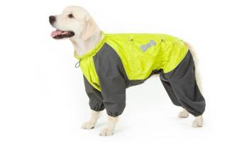 Выкройка комбинезона для собаки: удобный покрой своими руками
