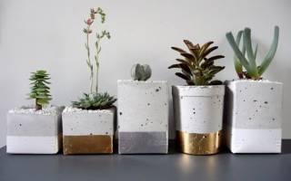 Горшки для цветов своими руками: варианты из дерева, из глины и из бутылок