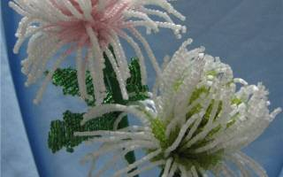 Хризантема из бисера: мастер класс и схема новичкам