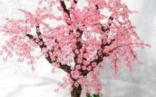 Деревья из бисера: схемы плетения сакуры, берёзы и апельсинового дерева с фото