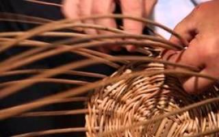 Плетение корзин из лозы для начинающих: плетение своими руками для начинающих