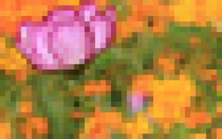 Заячьи уши своими руками: схема с фото