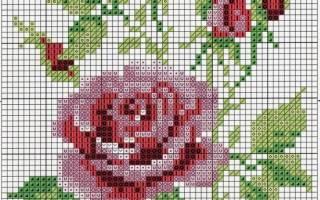 Вышивка крестом: схемы роз на примере белых и красных