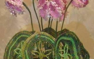 Цикламен из бисера: мастер класс и схема плетения